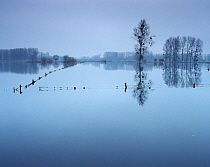 Flooded pastures, Chauny, Oise region, Picardy, France, January 2008