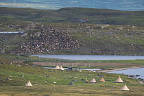 Sami camp where they collect their reindeer for calf marking, Lake Slappejaure. They use helicopter and motorcycles for moving the herd. Padjelanta National Park, Laponia World Heritage Site, Swedish...