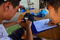 Scientists verifying data collected about the Indo-Pacific humpback dolphin (Sousa chinensis) nearby populations, Tai O, western side of Lantau Island, Hong Kong, China.  This Image is a part of the...