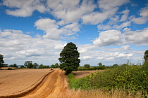 Combine harvester harvesting Oats, Haregill Lodge Farm, Ellingstring, North Yorkshire, England, UK, August.