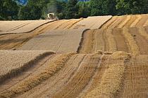 Combine harvester harvesting Oats, Haregill Lodge Farm, Ellingstring, North Yorkshire, England, UK, August