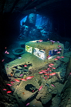 A British World War II Ford (Fordson) WOT3 truck inside the lower level of the hold (hold 2, port side) of the SS Thistlegorm wreck, with Red Sea soldierfish (Myripristis murdjan). Sha'ab Ali, Sin...
