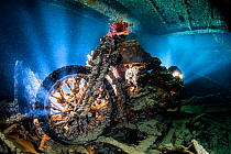 A backlit photo of a British World War II BSA M20 motorbike inside Hold 2 (port side, upper level) of the wreck of the Thistlegorm, with lionfish (Pterois volitans). Sha'ab Ali, Red Sea. Sinai, Eg...