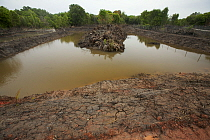 Freshly dug channels and pools to be used as fish or shrimp ponds, carved out of mangroves. Kedah, Malaysia. May 2006