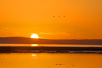 Sunrise over the Solent looking towards the Isle of Wight, New Forest National Park, Hampshire, England, UK.