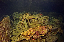 World War II British motorbikes (Norton 16H) stacked up on the back of truck in the hold of wreck of HMS Thistlegorm with soldierfish (Myripristis murdjan), Red Sea, Egypt.